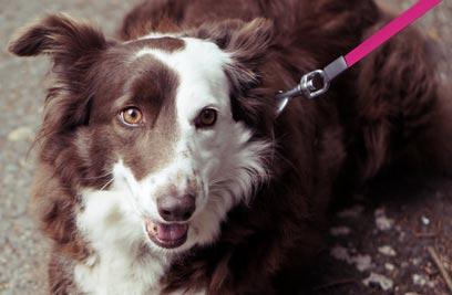 Tierhalterhaftpflicht: die ergänzende Versicherung für Ihren Vierbeiner